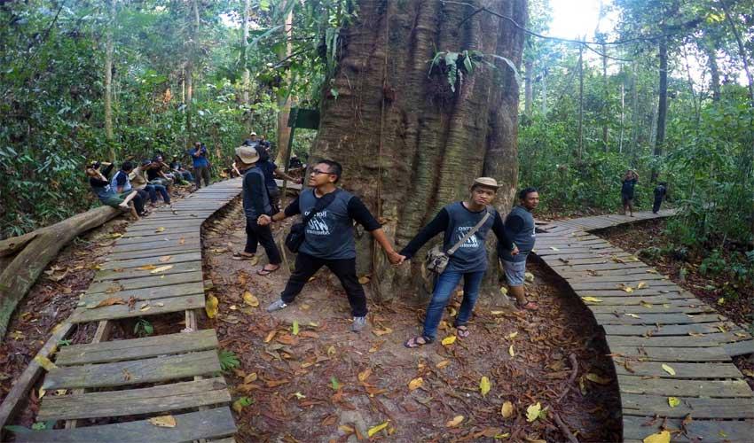 Pohon ulin di taman nasional kutai
