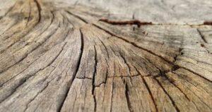 Kelemahan kayu bengkirai